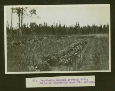 Historical photos courtesy of UNBC archives show rich framland in Fort Fraser BC, circa 1914