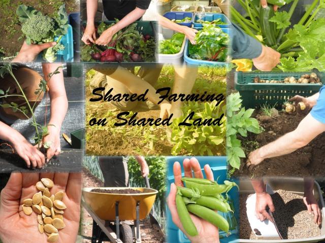 sharedfarmingsharedland